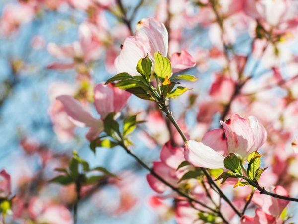 Füchslhof - Frühling