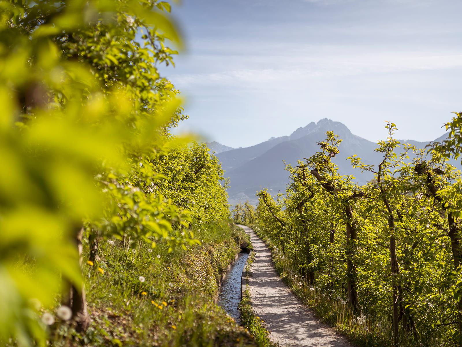 Bachlauf am Wegesrand gesäumt von Apfelbäumen